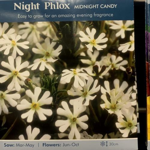 NIGHT PHLOX Midnight Candy