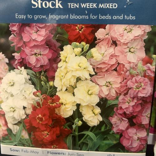 STOCK Ten Week Mixed
