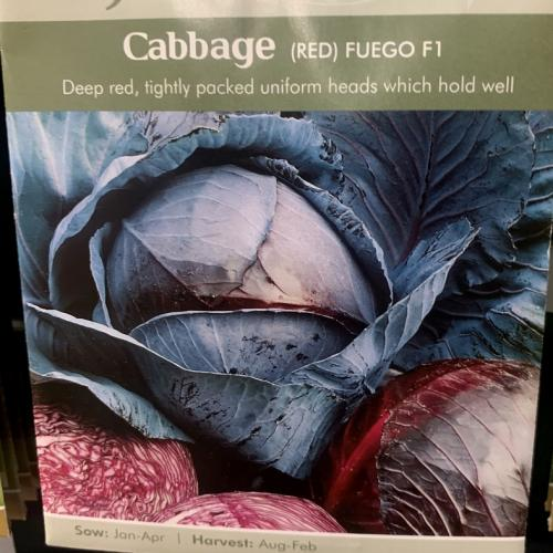 CABBAGE (Red) Fuego F1
