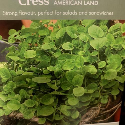 CRESS American Land