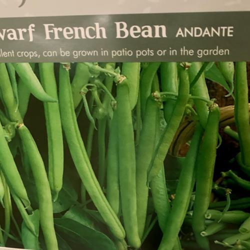 DWARF FRENCH BEAN Andante