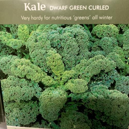 KALE Dwarf Green Curled