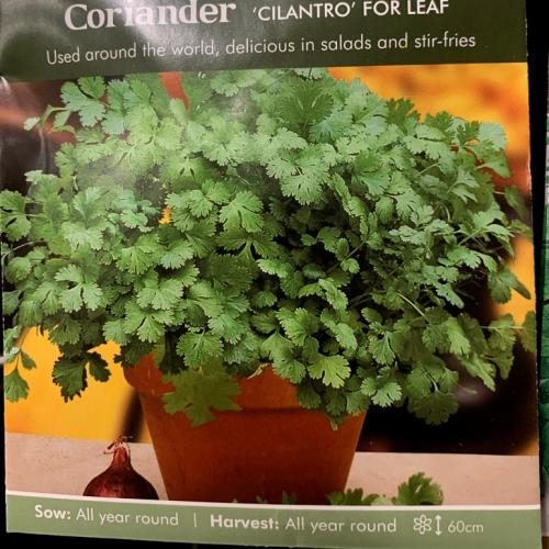 ORG CORIANDER Cilantro for Leaf